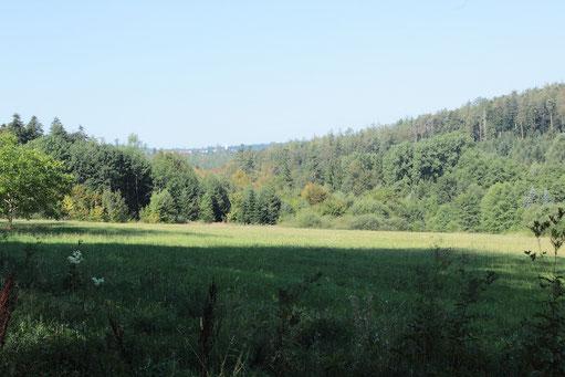bei Langenalb - Blick ins Maisenbachtal (G. Franke, 28.08.16)