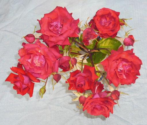 一枝につぼみを含め15個ものバラの花が・・