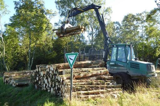 Aufsetzen des geschlagenen Fichtenholz am Rand des NSG. Foto: Gerd Ostermann