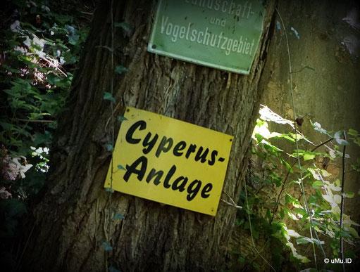 Cyperus 1901 e.V. Verein für Naturschutz, Aquarien- , und Terrarienkunde