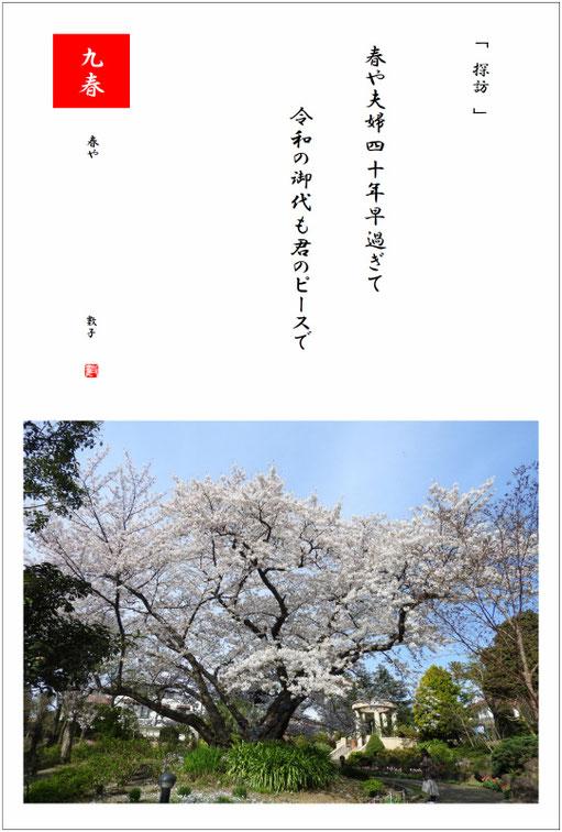 夫婦四十年の日 2019/04/01制作 横浜山手散策の桜