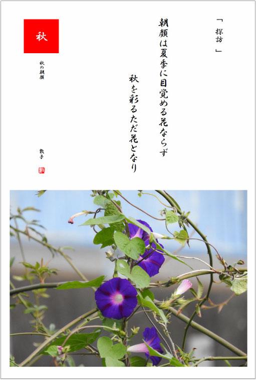 2018/11/02制作 朝顔(あさがお) 散策路の朝顔2018/10/31撮影