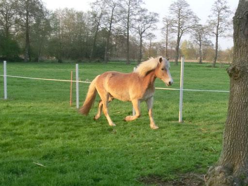 Bilder von meinen Ponys unter Fotoimpressionen