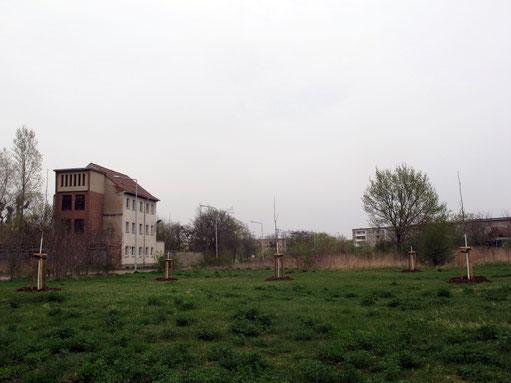 Vogelbeer - Quincunx, 4.2014, Dessau