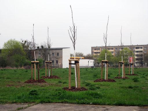 Vogelbeer - Autorenhain, 4.2014, Dessau