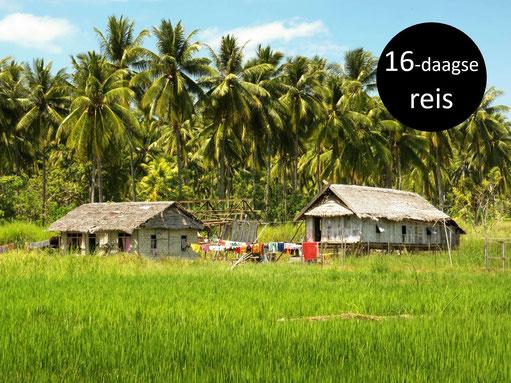 Lokale huisjes op Flores Kleine Sunda eilanden