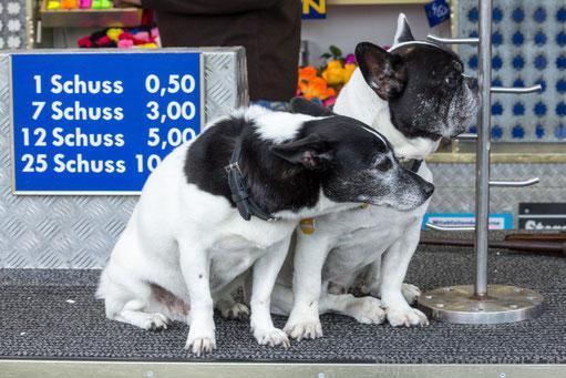Hunde sitzen auf der Theke der Schießbude einer Kirmes, Schießstand, Schuss.