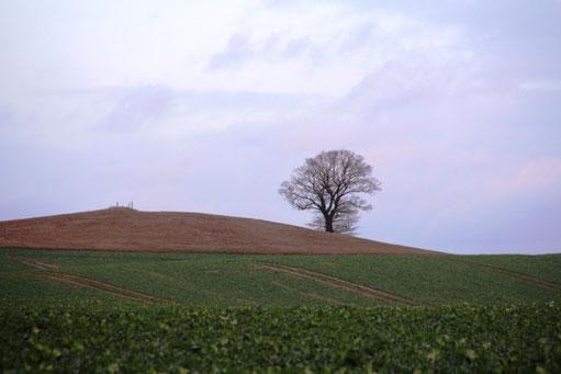 Einzelne Eiche an einem Berg stehend