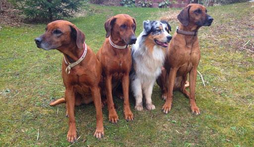 Saly, Chipo, Ace, Nala