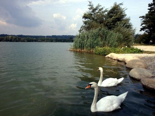 Der Viehofner See in St. Pölten, August 2015