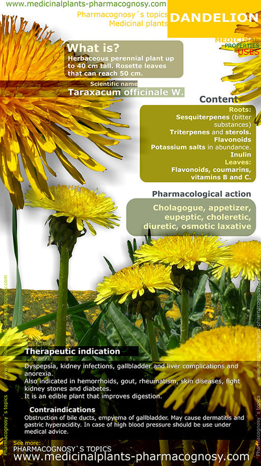 Dandelion benefits. Infographic