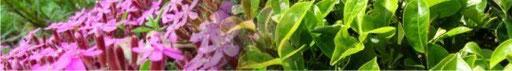 Pharmacognosy - Medicinal plants (Herbs)