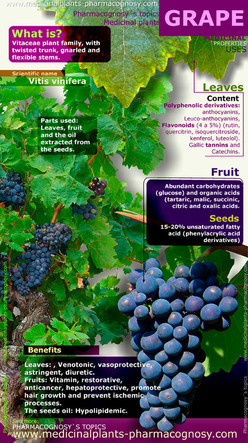 Grape benefits infographic