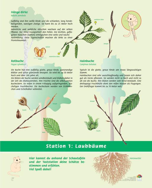 Laubbäume die du hier finden kannst