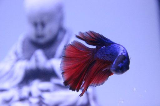 Natürlich sah man das Messethema auch den Aquarien und Fischen an