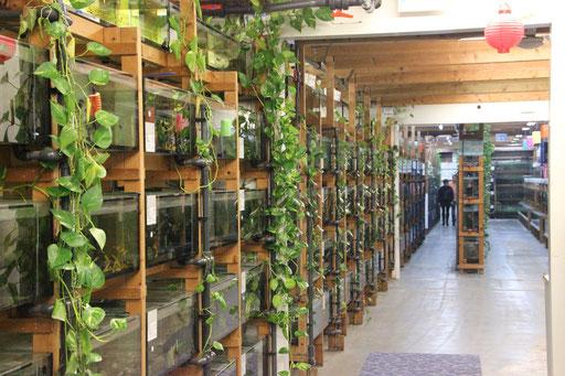 Auch der grüne Bewuchs hat System: Die Wurzeln der Efeututen entziehen dem Wasser Nitrat und bieten Versteckmöglichkeiten