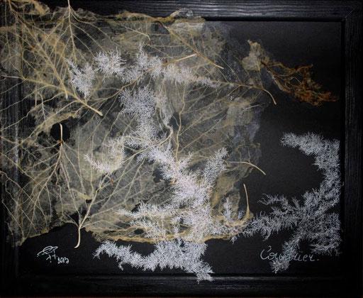 Papier végétal et rotring