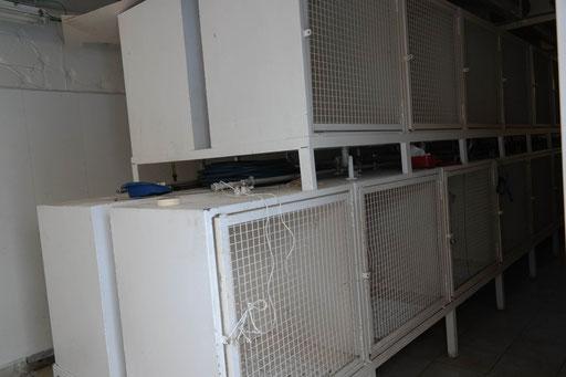 Hundeboxen auf Deck 11