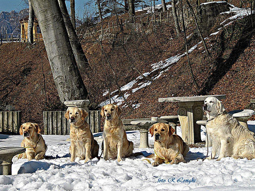 Snow Blink Team
