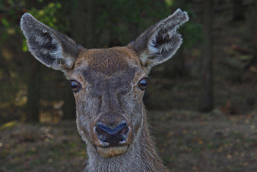 Auge um Auge, Foto: Dieter Neumann