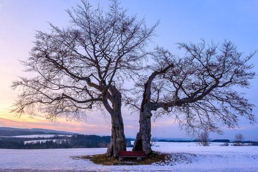 Kalte Staude, Foto: Heiko Prechtl