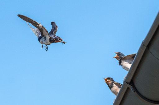 Aber bitte mit Fliege..., Foto: Günther Klein