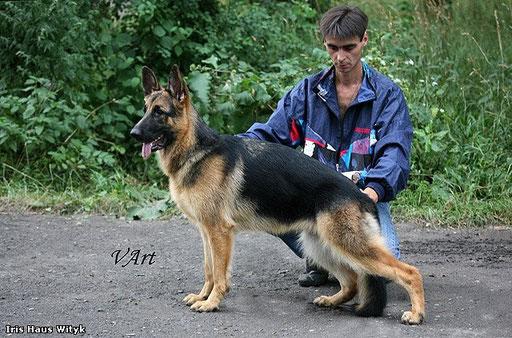 V 1 Iris Haus Wityk  (3-САС,2-R-CAC,1-САСІВ, BP,BJ,BISp,BOS).Хрустальний кубок України оцінка відмінно