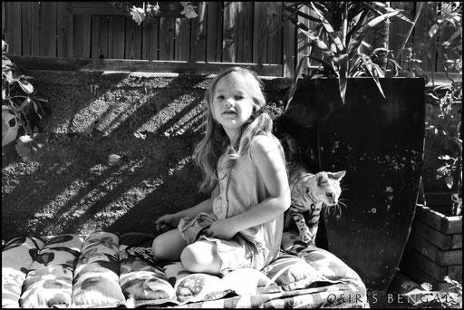 ANJALI ELYSOR SHERAKAN PENDEKAR PANTHERA ALC ASIAN LEOPARD CAT CHAT OSIRIS YORKI ELLA KERTESZ BELLARISTA
