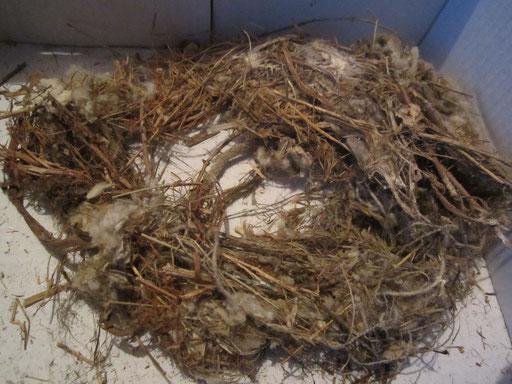 Ещё одно природное гнездо стрижей