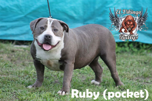 RUBY HEMBRA POCKET- 2 AÑOS