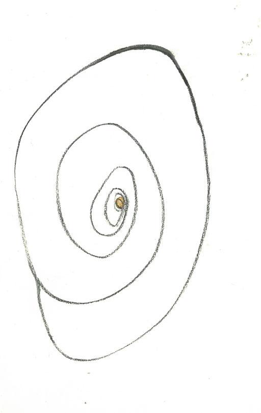 snail shell  20191121fra