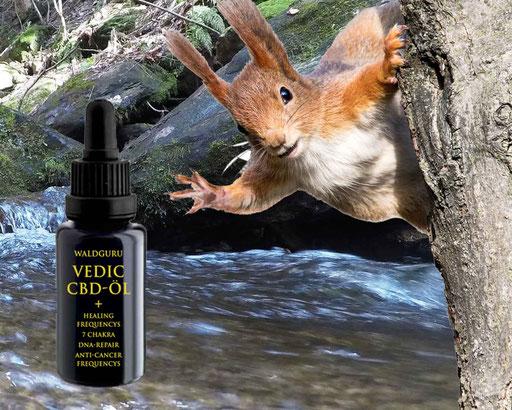 waldguru high spirit cbd blüten waldguru haze cbd buds buy kaufen bestellen suzy q hanfblüten österreich cbd austria www.waldguru-cbd.at www.highspiritcbd.com www.highspiritcbd.at cbd öl cbd oil vedic 7chakra cbdöl