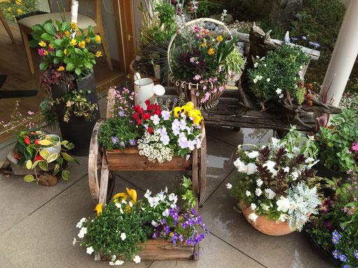 茶えずりのエントランスでお客様を迎えるお花たち