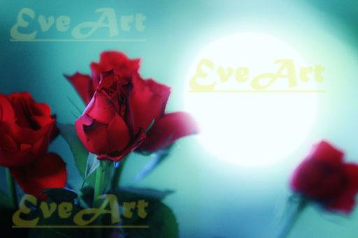 Rosen der Ritter ohne Furcht und Tadel