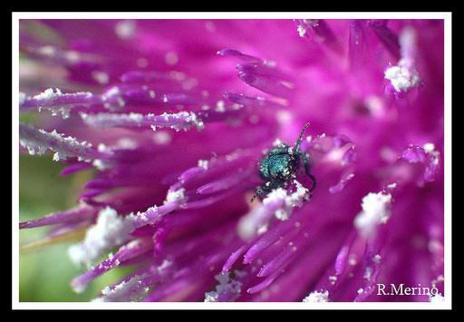 Verde y púrpura