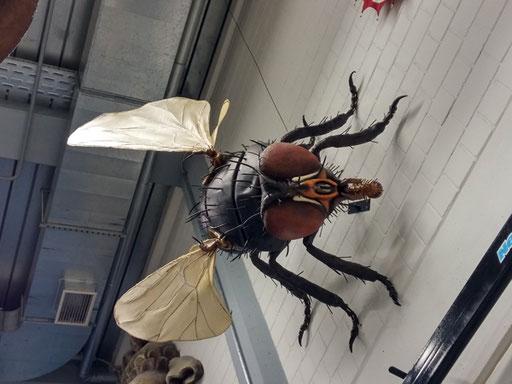 Riesenfliege aus Styropor an der Wand im SWR