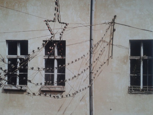 Foto: Fredder Wanoth, Lemberg 1991, Sowjetstern Girlanden
