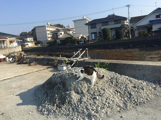 コスプレ 埼玉