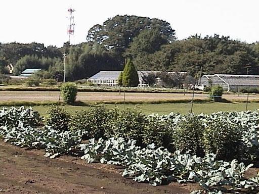 青梅街道に沿って広がる屋敷森と、新田の区画を今に伝える畑作地(2000年頃)