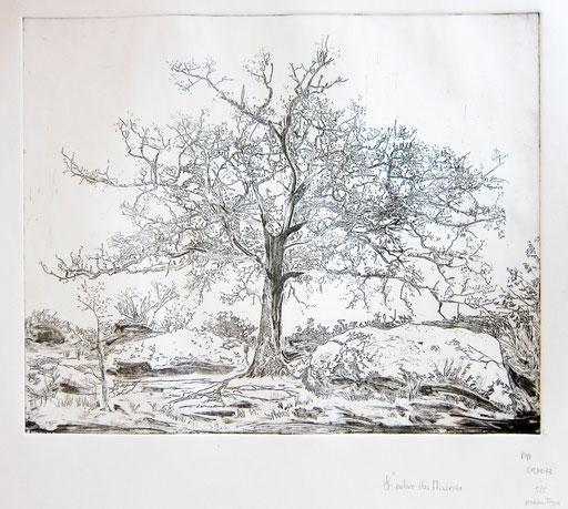 """""""l'arbre des Mourres"""""""