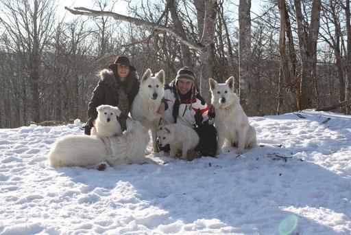 mont aigoual chien traineau berger blanc suisse washita ahow chiot a vendre disponible a donner qualité displaxie A