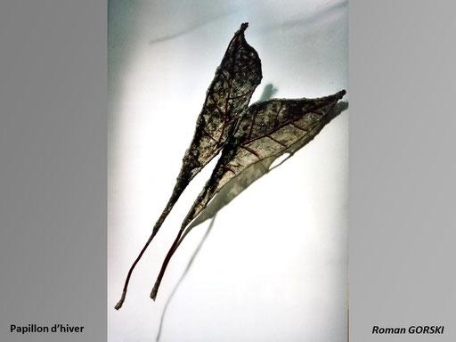 Papillon d'hiver - -Roman Gorski