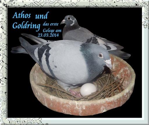 Athos mit Goldring am 25 .03.2014