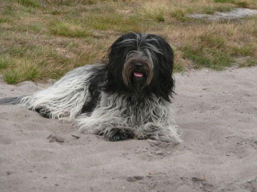 Frieda im Sand
