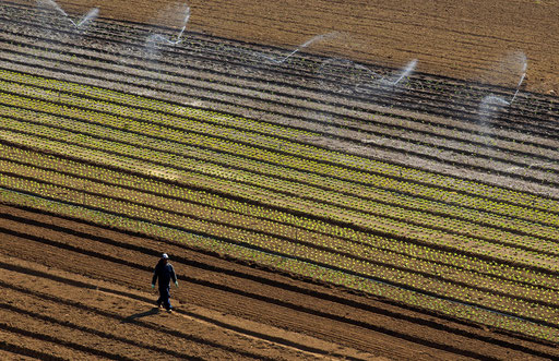 Peasant walks over the farmed field in Carvoeira 40 km (25 miles) North of Lisbon May 3, 2013.