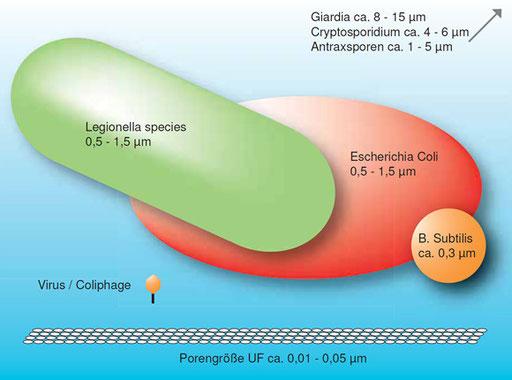 """Vergleich verschiedener Krankheitserreger mit der Größe der Poren der wasserbüro Ultrafiltrationsanlagen - """"das Kamel kann beim besten Willen nicht durchs Nadelöhr"""""""