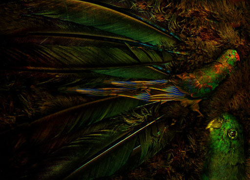 magic garden-eines schönen vogels reise in die federwelt