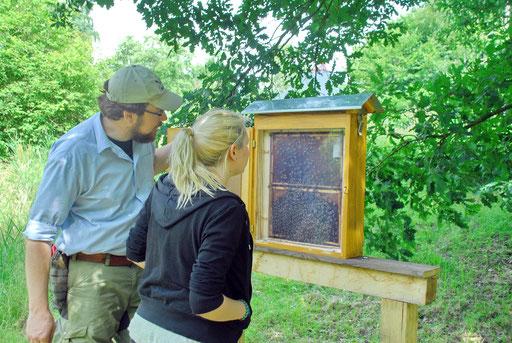 Wer sieht die Königin im Bienenstock? Das NABU-Team – im Bild: Swantje Kooymans und Hans Dietrich – bereitet viele Aktivitäten für Groß und Klein vor.