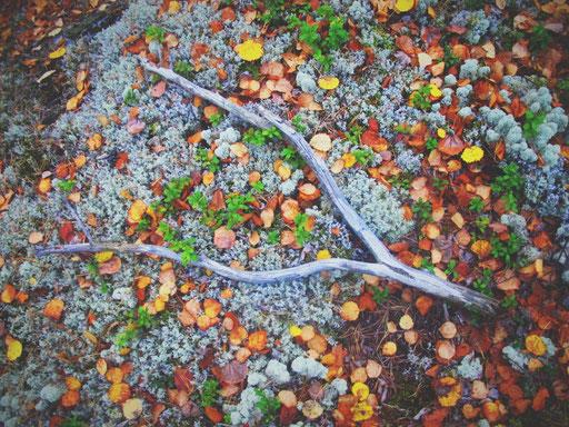 suède bigousteppes arbres bois automne feuille rouge orange