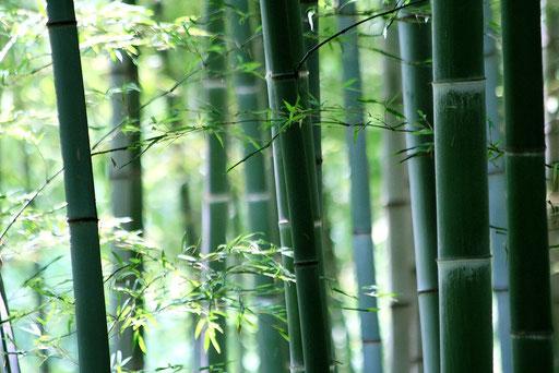 竹林  お気に入りの写真 奥行きがあって3Dのように見える